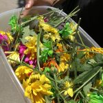 plastic container full of multi-color flowers